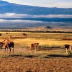 antelope-near-mountain